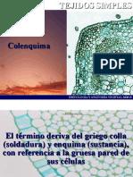 Colenquima08B