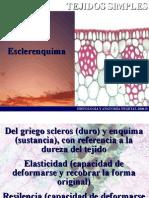 Esclerenquima08B