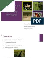 presentancion_insectos[1]