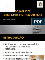 Patologias Do Sistema Reprodutor