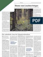 Die zauberhafte Aura des Johanniswürmchens - Aargauer Zeitung_130730