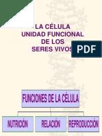Funciones de La Clula Eucariota 1193081245438437 3