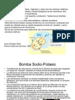 Bio Inorganic a 1