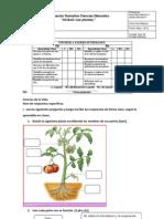 Evaluacion Cienciasnat 3ros Unidad Plantas