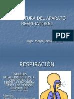 estructura_respiratoria[1]