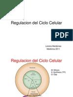 regulacionciclocelular-111020213023-phpapp02