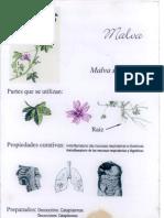Plantas12 Malva