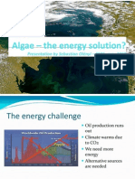Algae – the energy solution?