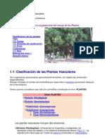 Morfologia de Plantas Vasculares