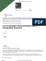 Los 8 Consejos Determinantes Para Fotografiar Insectos