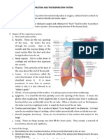 Respiratory System (Chart)