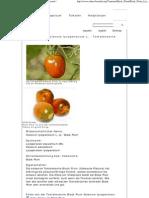 Black Plum - Solanum Lycopersicum L