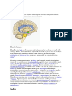 Cerebro y su partes.docx