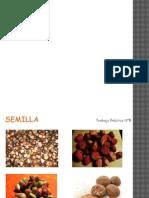 Seminario Introducción - TP 8 Semilla