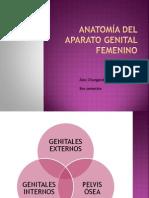 anatomadelaparatogenitalfemenino-121030212000-phpapp01