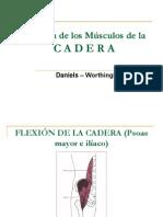 EXAMEN MÚSCULOS CADERA