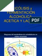 Glicolisis y Fermentacion
