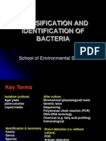 Classification and Indentification of Bacteria