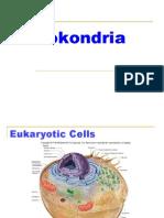 mitokondria - glikolisis - lisosom