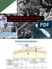 respuesta inmunitaria frente a bacterias y virus2009