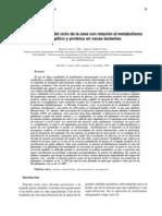 Aspectos clave del ciclo de la úrea con relación al metabolismo