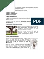 PODA DE ÁRBOLES.docx