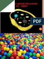 apresentao1celulas5ano-110603060625-phpapp02