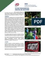 USAID RED Poscosecha Zucchini 08 06
