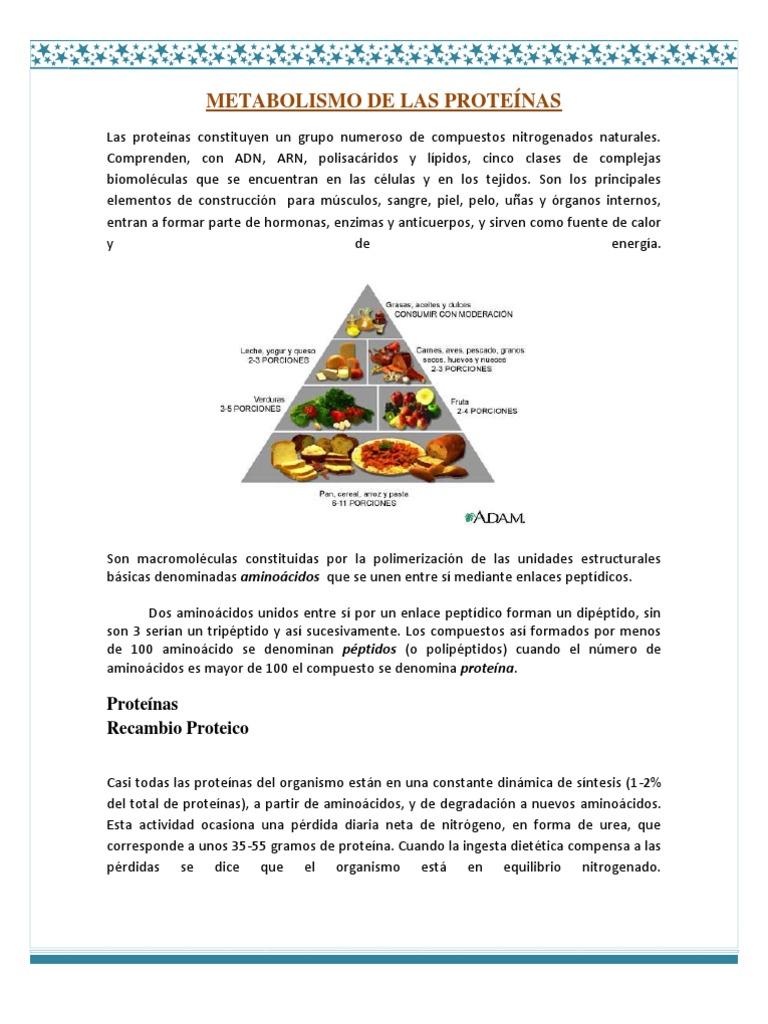 METABOLISMO DE LAS PROTEÍNAS - Péptido - Proteínas