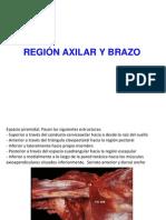 Clase3- Axila - Brazo 2013 PDF