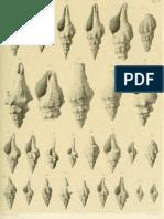 I molluschi dei terreni terziari del Piemonte e della Liguria; L. Bellardi, 1884 - PARTE 4 - Paleontologia Malacologia - Conchiglie Fossili del Pliocene e Pleistocene