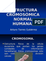 Cromosoma.