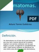 Dermatomas.