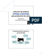 Seleccion de Hembras Ovinas y Bovinas Para Produccion