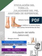 Articulacindeltobilloypie-110222173745-Phpapp02 Lhc Ficha 10