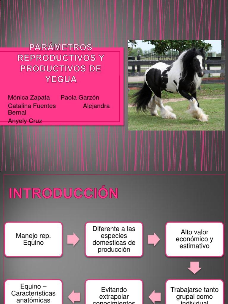 PARÁMETROS REPRODUCTIVOS Y PRODUCTIVOS DE YEGUA