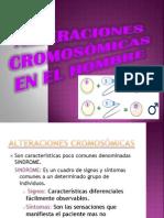 ALTERACIONES CROMOSÓMICAS   EN EL HOMBRE