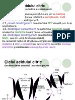 93Ciclul Acidului Citric