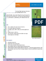 Factsheet10 - Green Hoper