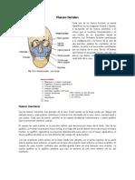 Resumen Huesos faciales