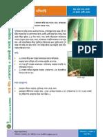 Factsheet2 - Golmasi