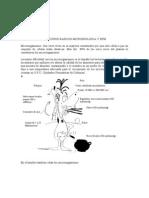 PRINCIPIOS BASICOS DE MICROBIOLOGIA Y BPM.doc