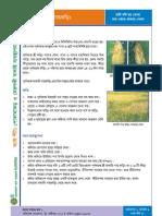 Factsheet12 - Brown Hopper