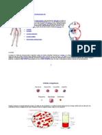 Circulatorio Grado 8