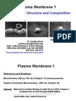 Smas - Plasma Membrane