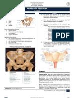 04. Anatomía Pelviana