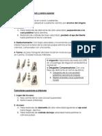 Resumen Accesos endodontico.
