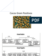 Cocos Gram Positivos