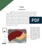 4855699-Ficat-anatomie