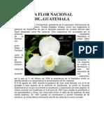 simbolos patrios de guatemala.pdf